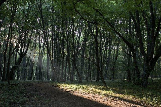 Лесными тропами в июле