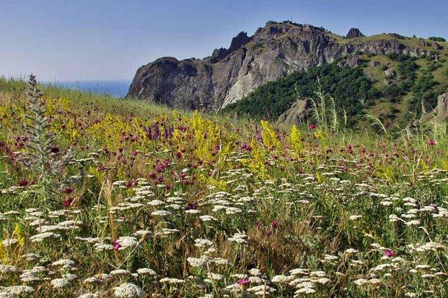 Разнотравье летом в Крыму