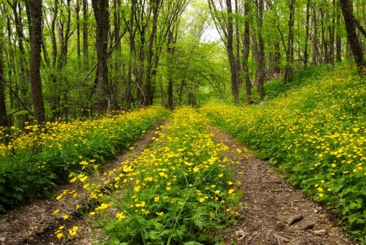 Крым май лес