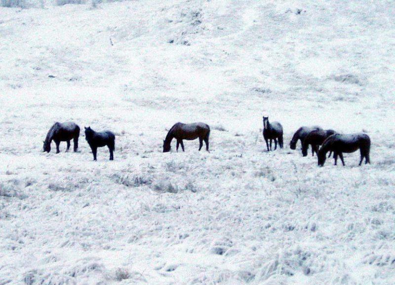 Лошади на заснеженном плато Караби