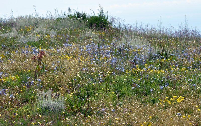 Весеннее разнотравье на перевале Алакат